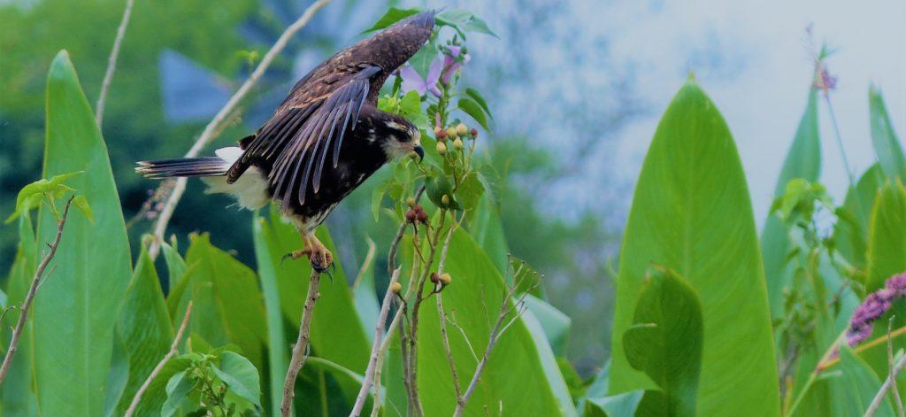 Por Nuestro Gran Chaco Sustentable: Participación activa en modelos de gestión territorial para la conservación ambiental integrada con la producción sostenible